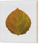 Green And Red Aspen Leaf 5 Wood Print