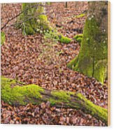 Green And Red Nature In The Forest Wood Print