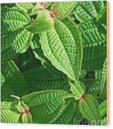 Green And Ruffled Wood Print