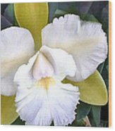 Green And White Cattleya Orchid Wood Print