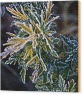 Green And Yellow Frost Wood Print
