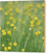 Green And Yellow Vintage Wood Print
