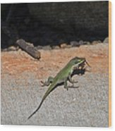 Green Anole Lizard Vs Wolf Spider  Wood Print