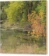Green Ash In Autumn Foliage Wood Print
