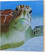 Green Back Turtle Wood Print by David Hawkes