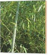 Green Bamboo Wood Print