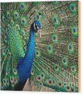 Green Beautiful Peacock Wood Print