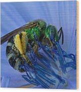 Green Bee Blue Moment Wood Print