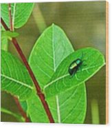 Green Beetle Foraging Wood Print