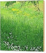 Green Wood Print by Beverly Hammond