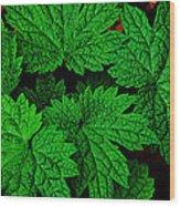 Green Burst Wood Print by James Hammen