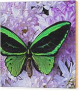 Green Butterfly And Mums Wood Print