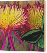 Green Butterfly On Fire Mums Wood Print