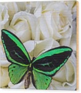 Green Butterfly With White Roses Wood Print