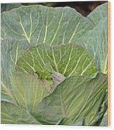 Green Cabbage Wood Print