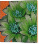 Green Cactus Flowers Wood Print