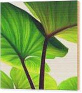 Green Canopy Pastel Wood Print