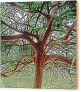 Green Canopy Wood Print by Terry Reynoldson