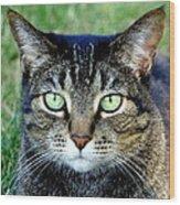 Green Cat Eyes In Summer Grass Wood Print