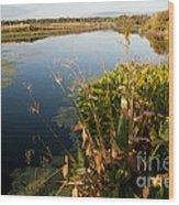 Green Cay Wetlands, Fl Wood Print by Mark Newman