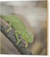 Green Chameleon Wood Print