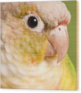 Green-cheeked Conure Pineapple P Wood Print