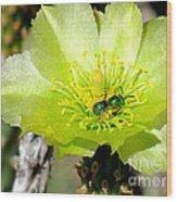 Green Cholla Beauty Wood Print