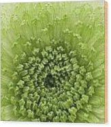 Green Chrysthanthemum Wood Print