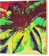 Green Clematis Flower Wood Print