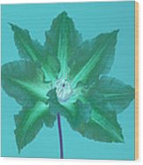 Green Clematis On Turquoise Wood Print