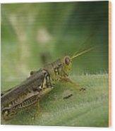 Green Closeup Grasshopper Wood Print