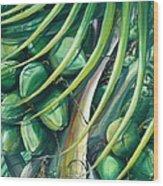 Green Coconuts  2  Wood Print