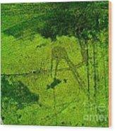 Green Color Sigh Wood Print