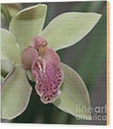 Green Cymbidium Macro  8384 Wood Print