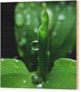 Green-dew Wood Print