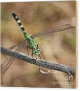 Green Dragonfly Square Wood Print