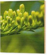 Green Dream Wandering Wood Print