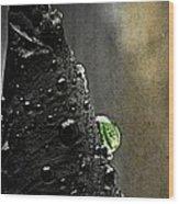 Green Droplet  Wood Print
