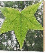 Green Droplets Wood Print