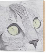 Green Eyed Cat Wood Print
