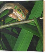 Green Eye'd Frog Wood Print