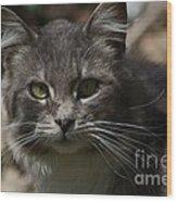 Green Eyed Kitty Cat Wood Print