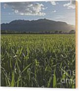 Green Field In Sunset Wood Print