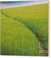 Green Field Wood Print