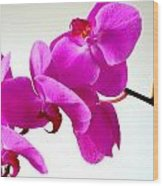Green Field Sweetheart Orchid No 1 Wood Print