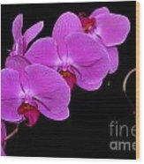 Green Field Sweetheart Orchid No 2 Wood Print