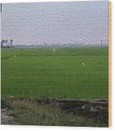 Green Fields With Birds In Kerala Wood Print