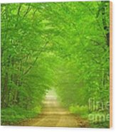 Green Forest Tunnel Wood Print