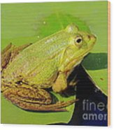 Green Frog 2 Wood Print