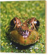 Green Frog Hiding Wood Print